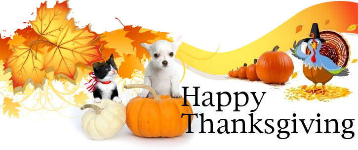 Image result for dog and cat thanksgiving